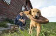 Бейли в поисках смысла. «Собачья жизнь», режиссер Ласссе Хальстрем